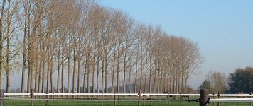 Hof Ter Velde - Oosteeklo - Prive stal (weiden)